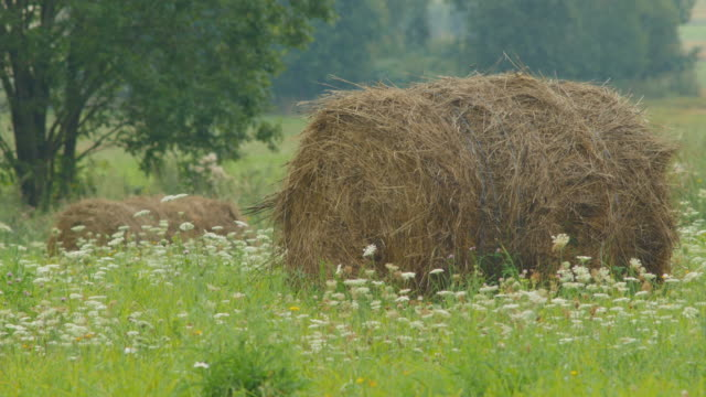 Hay rolls on a flowered meadow video