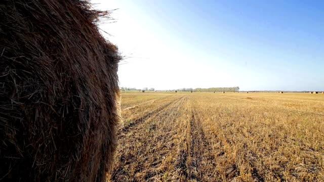 haystack in autumn summer field video