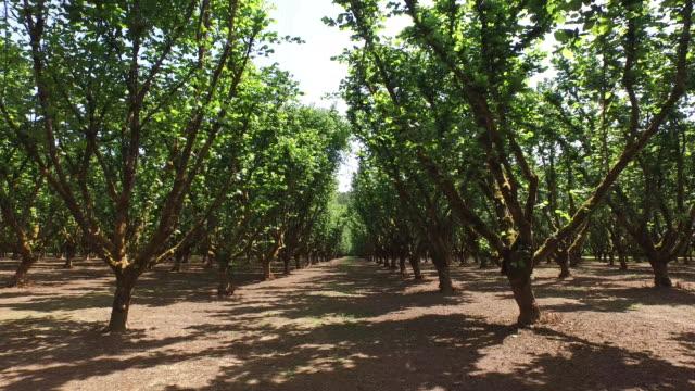 hasselnöt orchard - fruktträdgård bildbanksvideor och videomaterial från bakom kulisserna