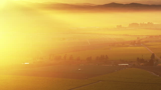 hazy sunrise in monterey county vineyards - aerial shot - california video stock e b–roll