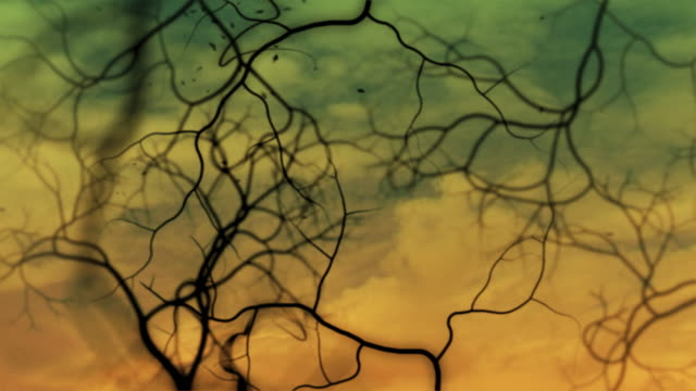 hd abstract background loopable video