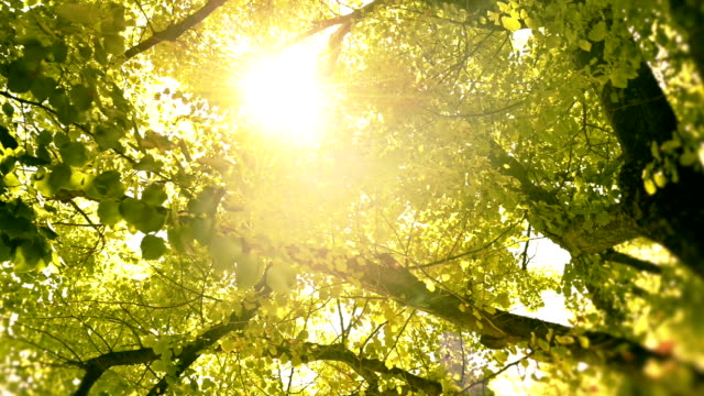 hd video dolly emotional sun watching through trees and leaves video