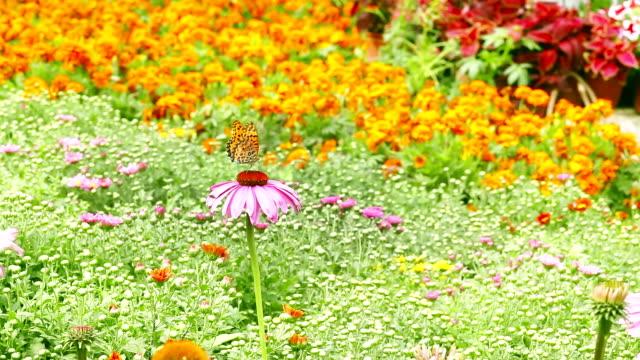 hd1080p: butterly volare in giardino - giardino pubblico giardino video stock e b–roll