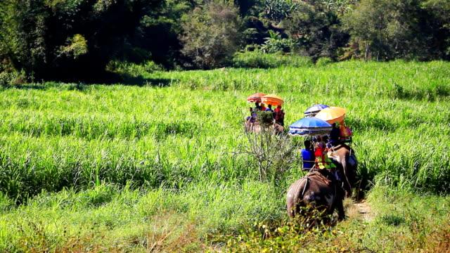 HD:Elephant trekking. video