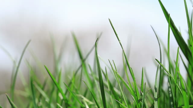 HD:Green grass Green grass ona beautiful day blade of grass stock videos & royalty-free footage
