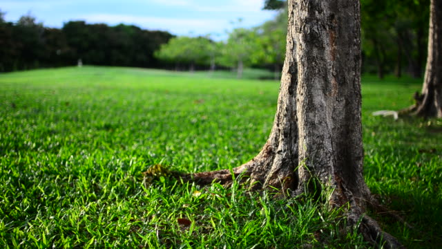 HD:Green lawn and grass with movement video