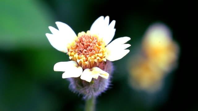 HD:macro Flower video