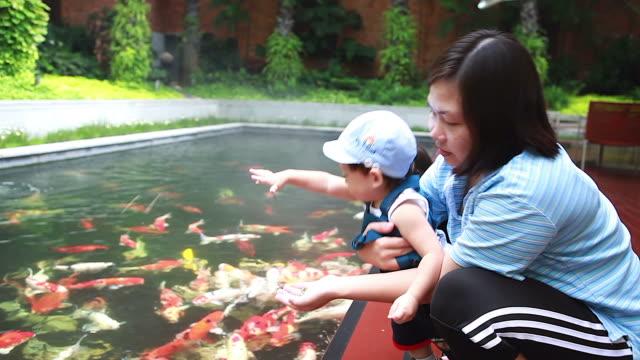 stockvideo's en b-roll-footage met hd:mom en zoon vakantie activiteiten voeding voor koi vissen. - carp