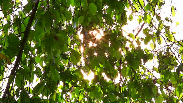 HD:Morning light sunbeam through the leaf on the tree.