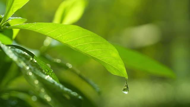 stockvideo's en b-roll-footage met hd:morning natuur achtergrond met mooie druppel. - regen zon
