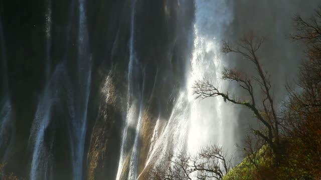 vidéos et rushes de hd :  matin de lumière et de rideaux de l'eau comme arrière-plan. - arbre tropical