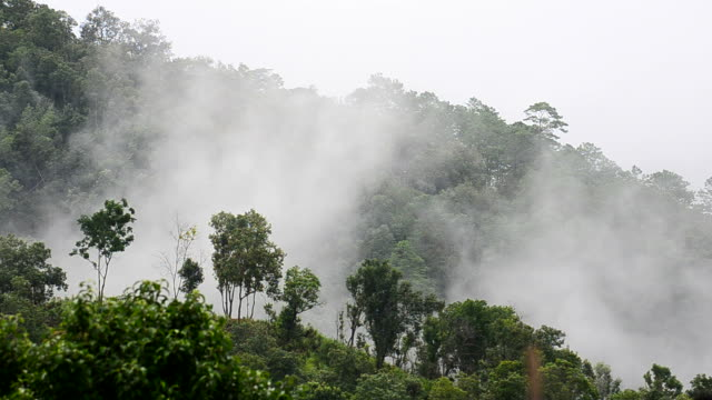 hd :山霧 - アルタイ自然保護区点の映像素材/bロール