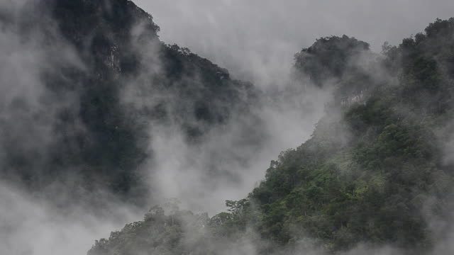 hd:mountain in the mist - trees in mist stock videos & royalty-free footage