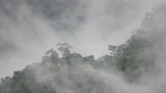 hd: montagna nella nebbia - yeti video stock e b–roll