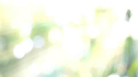 vídeos de stock e filmes b-roll de hd:nature green bokeh sunlight backgrounds. - espiritualidade