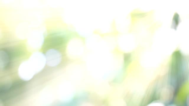 HD:Nature green bokeh sunlight backgrounds. video