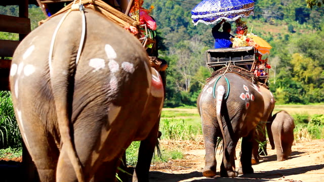 HD:Ordination by Elephant.(Thailand traditional culture) video