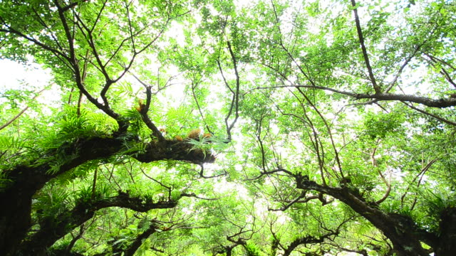HD:Plum Tree and forest in nature video