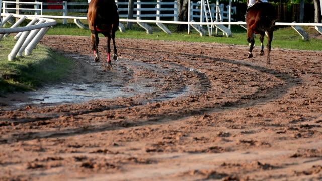 hd:racehorse - racehorse track bildbanksvideor och videomaterial från bakom kulisserna