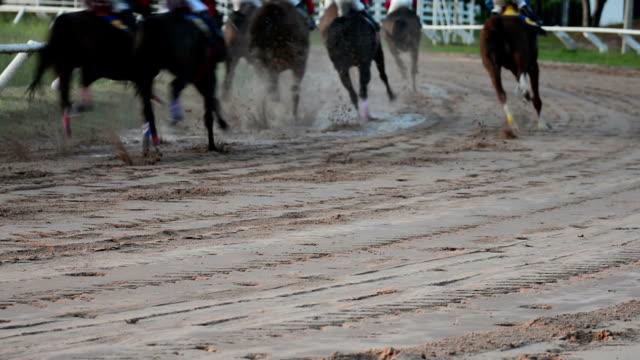 hd: rennpferd - pferderennen stock-videos und b-roll-filmmaterial