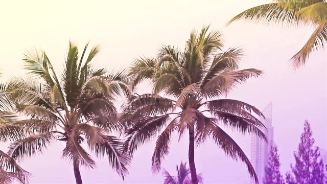 HD:Seamless Loop Palmtrees on a beach Seamless Loop Palmtrees on a beach indian ocean islands stock videos & royalty-free footage