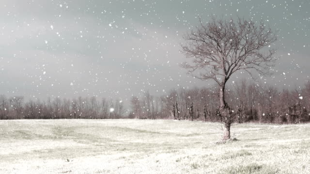 HD:Snowy Winter Landscape video