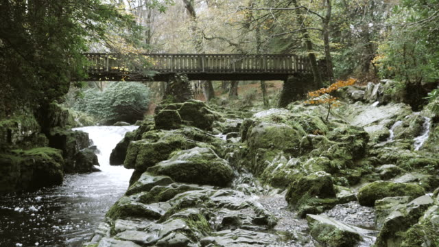 HD:stream and wooden bridge in tollymore park,Northern Ireland video