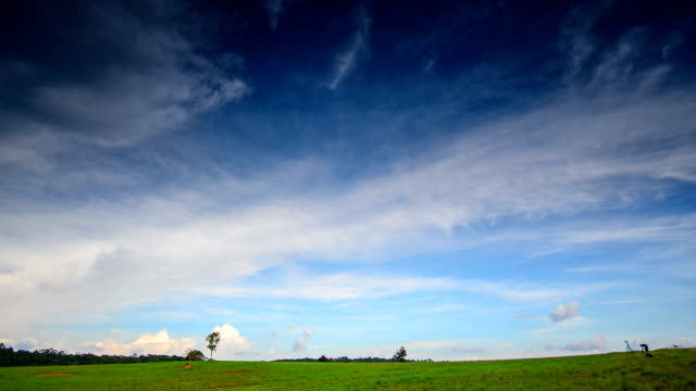 HD:Timelapse of green grass and blue sky cloudy video