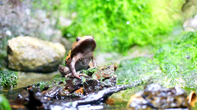 HD:Toad in nature. Toad in nature. frog stock videos & royalty-free footage