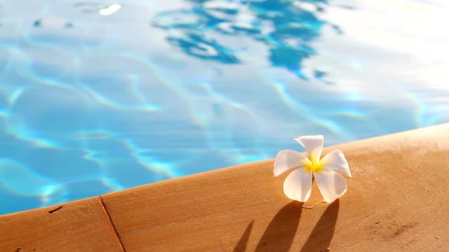 HD:Tropical frangipani flower on the pool. video