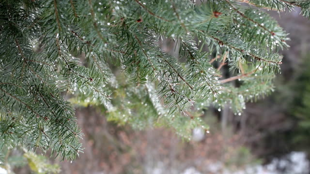 HD:Winter Background video