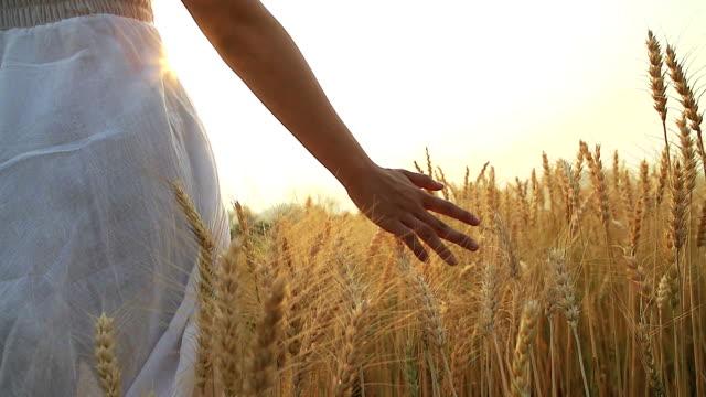 hd:donna al tramonto estivo al campo di grano. - grano graminacee video stock e b–roll
