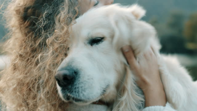 He is my best friend! Woman hugging retriever dog hug stock videos & royalty-free footage