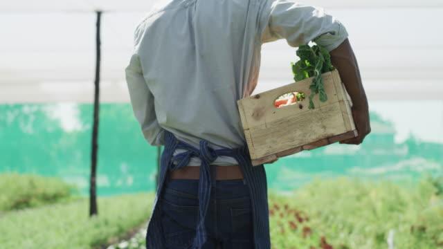 vídeos de stock e filmes b-roll de he seems to be having a plentiful harvest - estufa estrutura feita pelo homem
