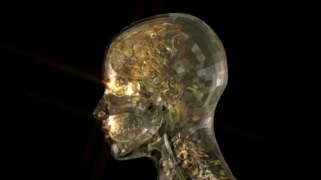 kopf-anatomie-animation - menschlicher kopf stock-videos und b-roll-filmmaterial