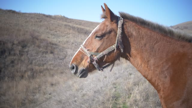 head of a brown horse with a cropped mane video