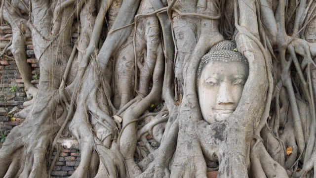 Head of Buddha at Wat Mahathat temple, Ayutthaya, Thailand video