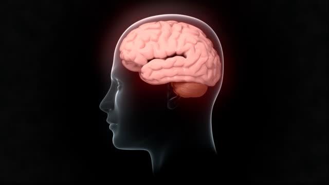 head with pulsating brain - människohuvud bildbanksvideor och videomaterial från bakom kulisserna