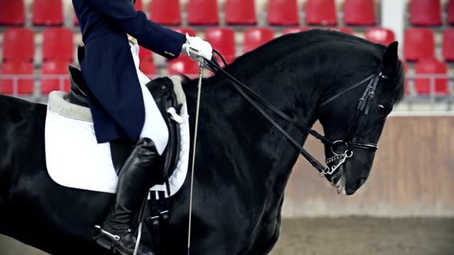 headless horseman - sella video stock e b–roll