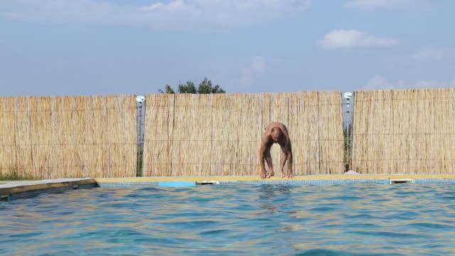 sano uomo anziano attivo nuoto in piscina all'aperto - lega sportiva amatoriale video stock e b–roll