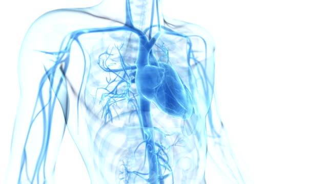 zdrowe bijące serca - serce człowieka filmów i materiałów b-roll