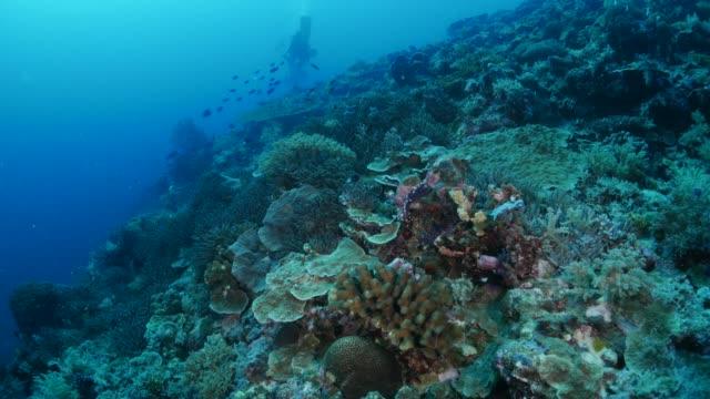 vídeos y material grabado en eventos de stock de arrecife de coral sano, palau - sea life park