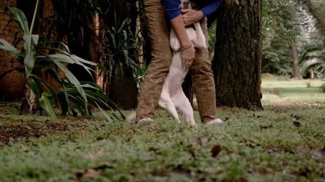 healthy cute medium sized mixed breed dog jumping and running - сбежавший из дома стоковые видео и кадры b-roll