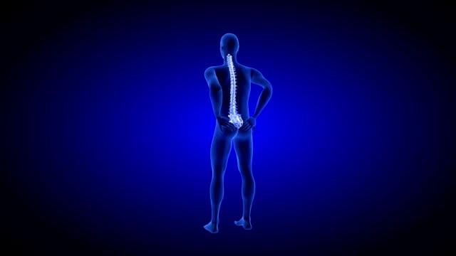 Healthy spine. Spine Pain. Healt Blue Human Anatomy Body 3D scan render on blue background video