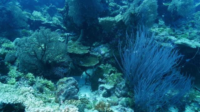 vídeos y material grabado en eventos de stock de arrecife de coral submarino sano - zona pelágica