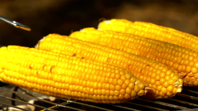 Healthy vegetarian barbecue with ripe golden corn on coals and turn it around by using barbeque tongs Healthy vegetarian delicious barbecue with ripe golden corn on coals and turn it around by using barbeque tongs seared stock videos & royalty-free footage