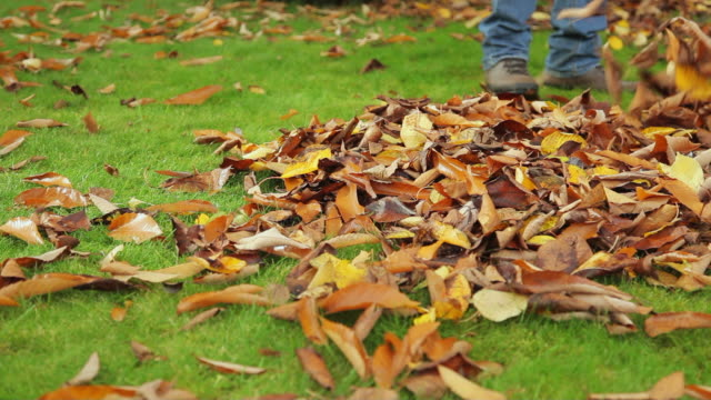 Heap of Autumn leaves video