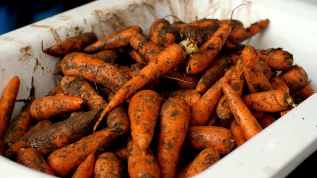vídeos y material grabado en eventos de stock de montón de zanahorias sucias - imperfección