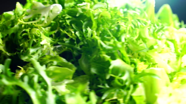 Heap of green frisse salad leaves on a rotating plate video