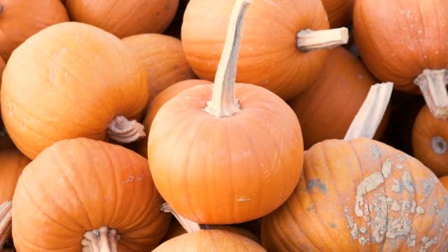 heap of pumpkins for sale in a pumpkin patch - pumpkin стоковые видео и кадры b-roll